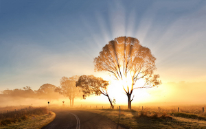 Sunrise over road with trees